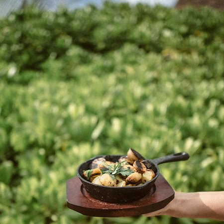 Comer, Géorgie: El Hoyo Parrilla de mar en Tekio