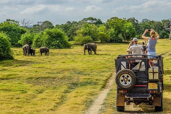 Wilpattu Morning Safari Day Tour - Fra...