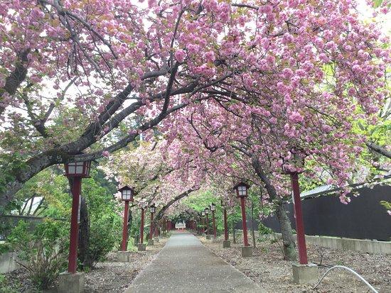 Kashihara Shrine