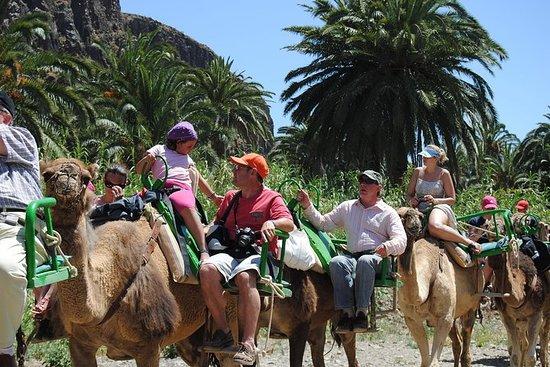 Excursion à dos de chameau dans le parc à chameau Grande Canarie...
