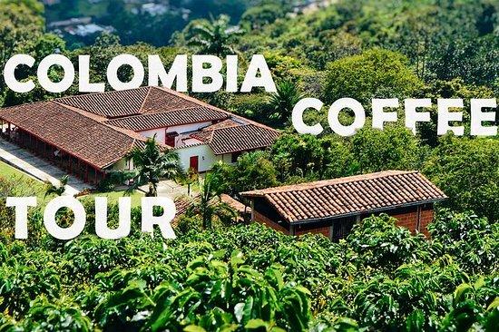 Colombia Coffee Tour - Demi-journée...