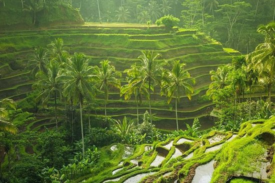 Ubud Instagram Spots Tour - One Day...