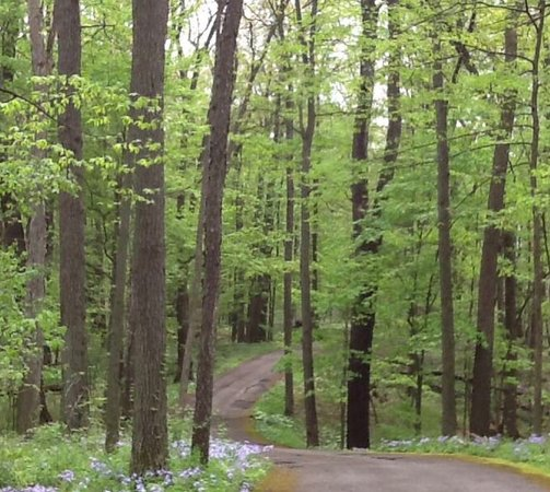 Tipton, MI: The winding roads and hills of Hidden Lake Gardens.   This was from spring a few years ago, but is my favorite!