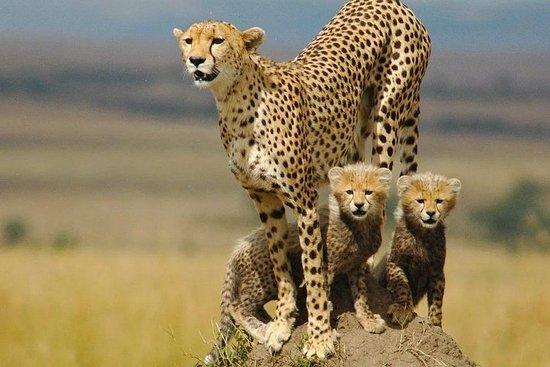 15 dias Explore o Uganda Safari, vida...