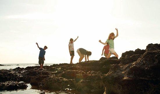 Beaumaris, Австралия: Rockpooling at Ricketts Point Marine Sanctuary