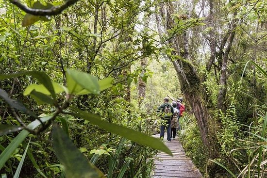 "Full Day Chiloé National Park Following ""The Darwin´s Route"" Regular"