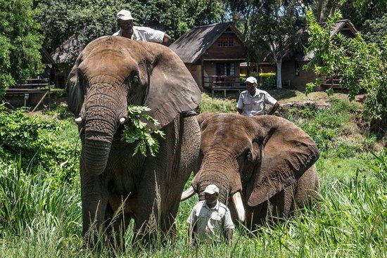 L'équipe d'éléphant Whispers