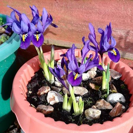 المملكة المتحدة: Good morning, TripAdvisor friends! Springtime is near. Enjoy your day! 🌞