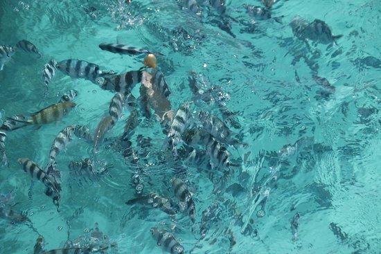 Schnorcheln mauritius Tauchen und