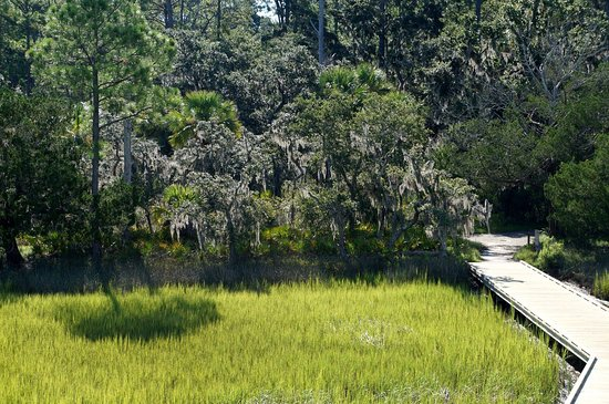 Savannah, GA: view of the big ferry trail from the observation tower