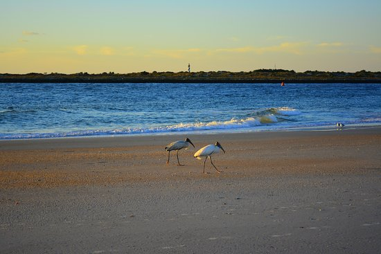 Morning rays – obrázek zařízení The Saint Augustine Beach House, Vilano Beach - Tripadvisor