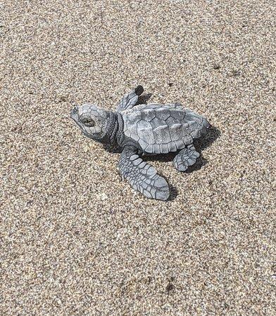 The Turtle Sanctuary Experience from Mazatlan Photo