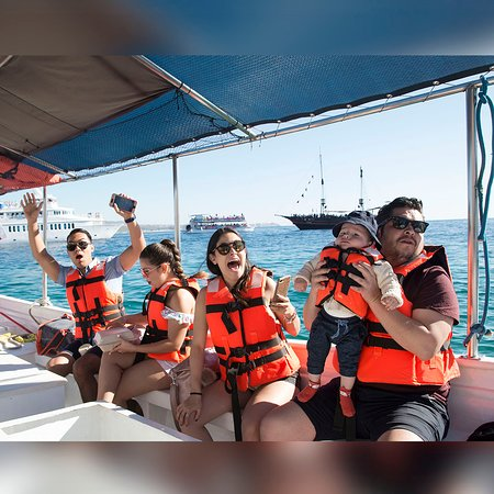 Momentos inolvidables en el Whale Watching Tour de Sea Sports In Cabo