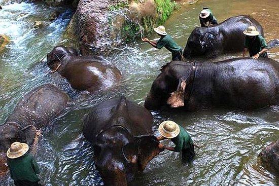Expérience avec le camp d'éléphants...