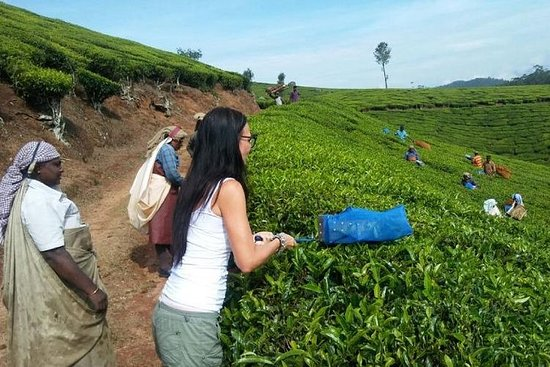 Haz tu propio té en Munnar