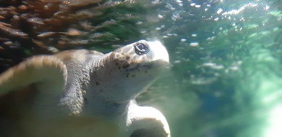 The beautiful Turtle Anitopia