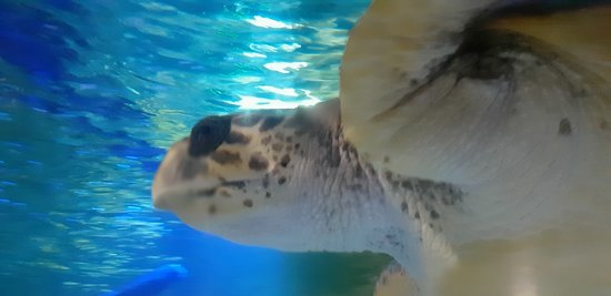 Wonderful been this close to a turtle