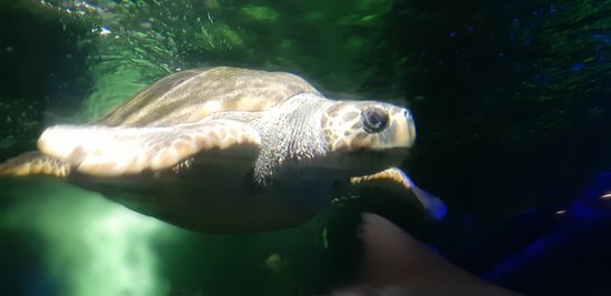 Outstanding turtle