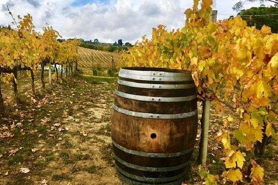 Excursión de medio día a Chianti Wine...