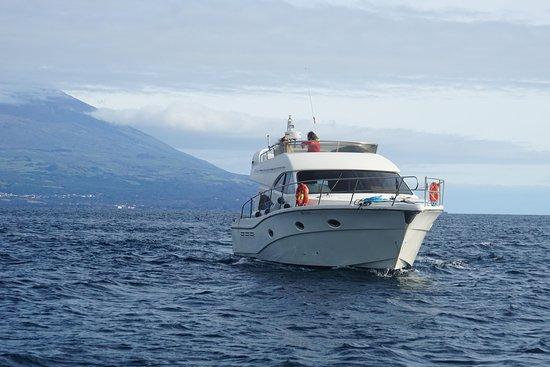 Faial Island صورة فوتوغرافية