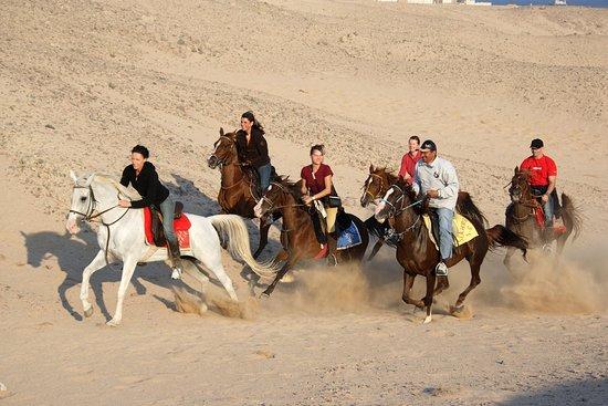 Sea Horse Sahl Hashesh Hurghada