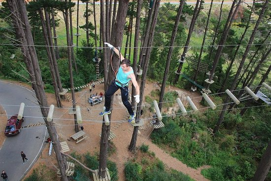Adrenalin Forest Obstacle Course i Wellington