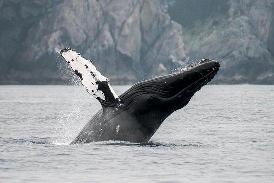 Observation des baleines dans la...