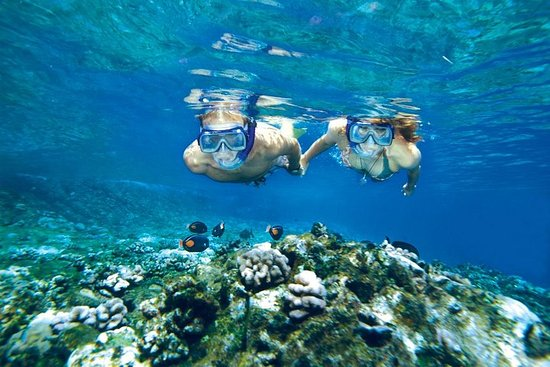 Molokini and Turtle Arches Snorkeling...
