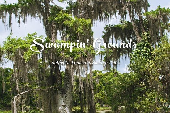 Swampin' Grounds