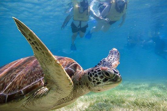 Turtles Express Φωτογραφία
