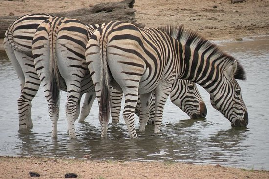 3 Night 4 Day Kruger National Park Safari with Panorama Route