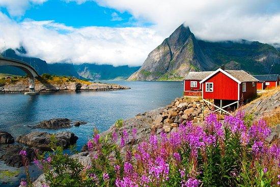 2 -day summer sightseeing & photography tour in Lofoten