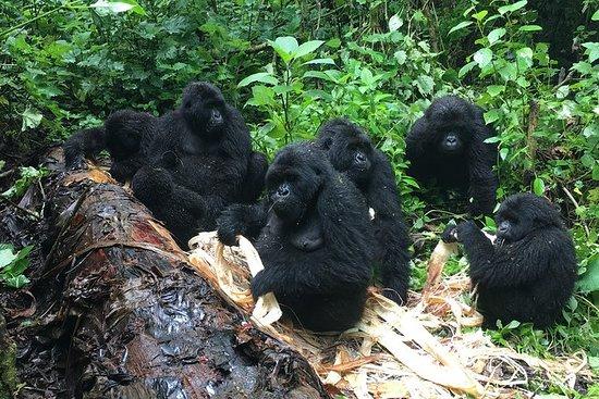 7 dias 2 vezes gorila trekking e...