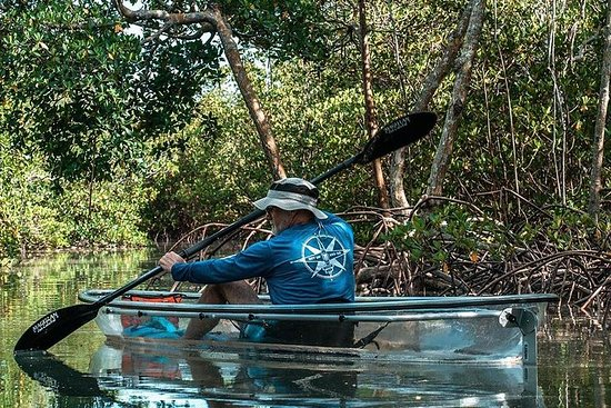 Clear Kayak Tours à Fort Pierce