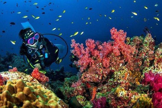 Scuba Diving Grand Island +5 Water...
