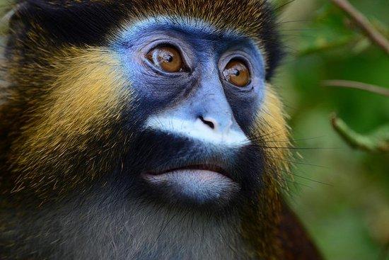Safari de 8 jours au Gabon et au Congo