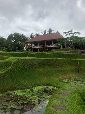 Green Kubu Cafe