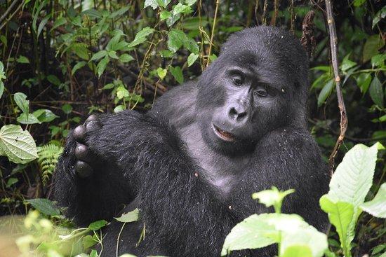 African Expert Safaris.