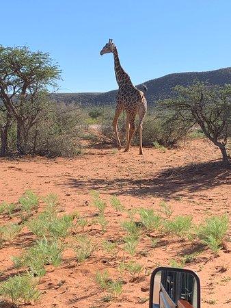 Tswalu Kalahari Game Reserve ภาพถ่าย