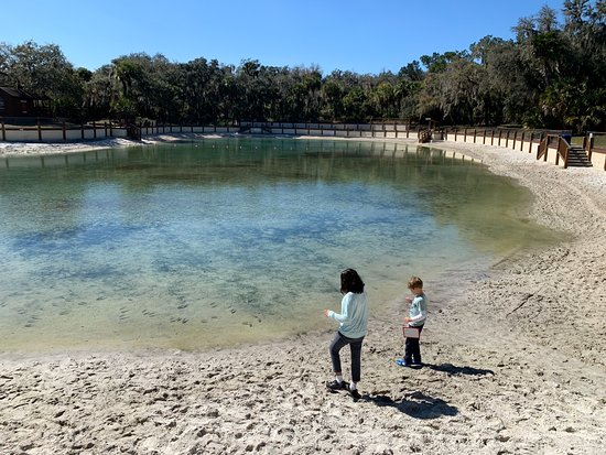 Lithia, FL: Piscina natural