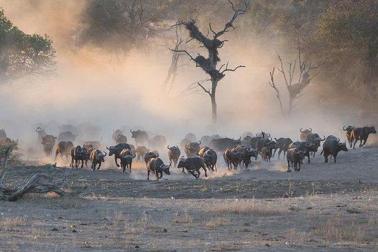 Kruger Park Safari & Charter