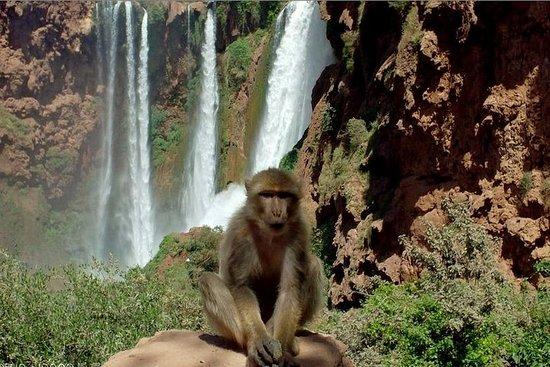 Ganztägige majestätische Ouzoud Falls...