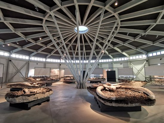 "Museo Paleontologico ""Luigi Boldrini"""