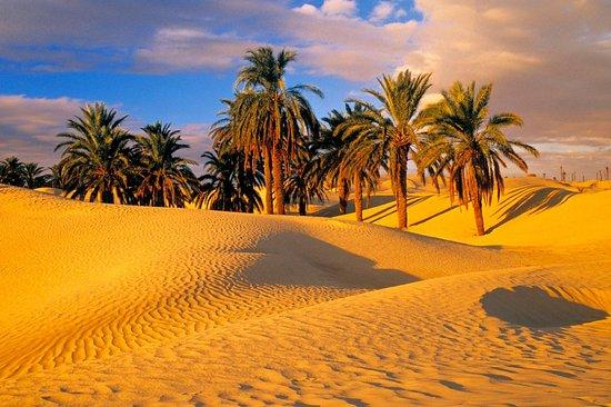 Desertica Tours