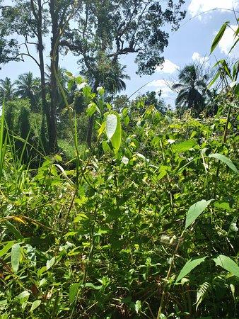Sinharaja Rain forest tours: Rainforest