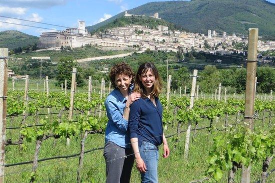 Cata de vinos y paseo por los viñedos...