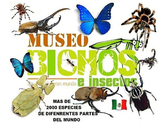 Museo de Bichos Querétaro