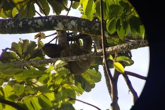The sloth trail in La Fortuna, Arenal...