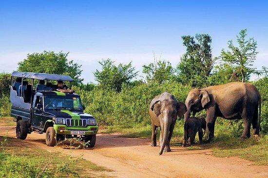 Safari d'une demi-journée à Udawalawe...