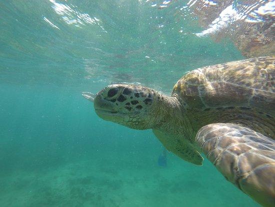 Mirissa Snorkeling Tours